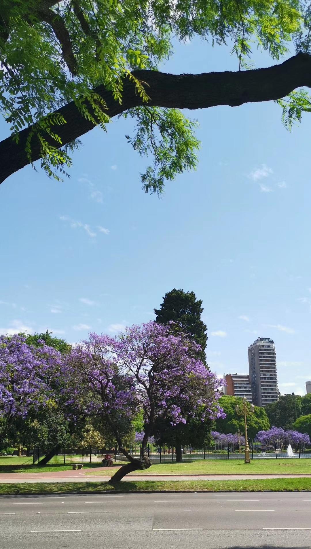 布宜诺斯艾利斯,街景,一个有传承的美丽城市。