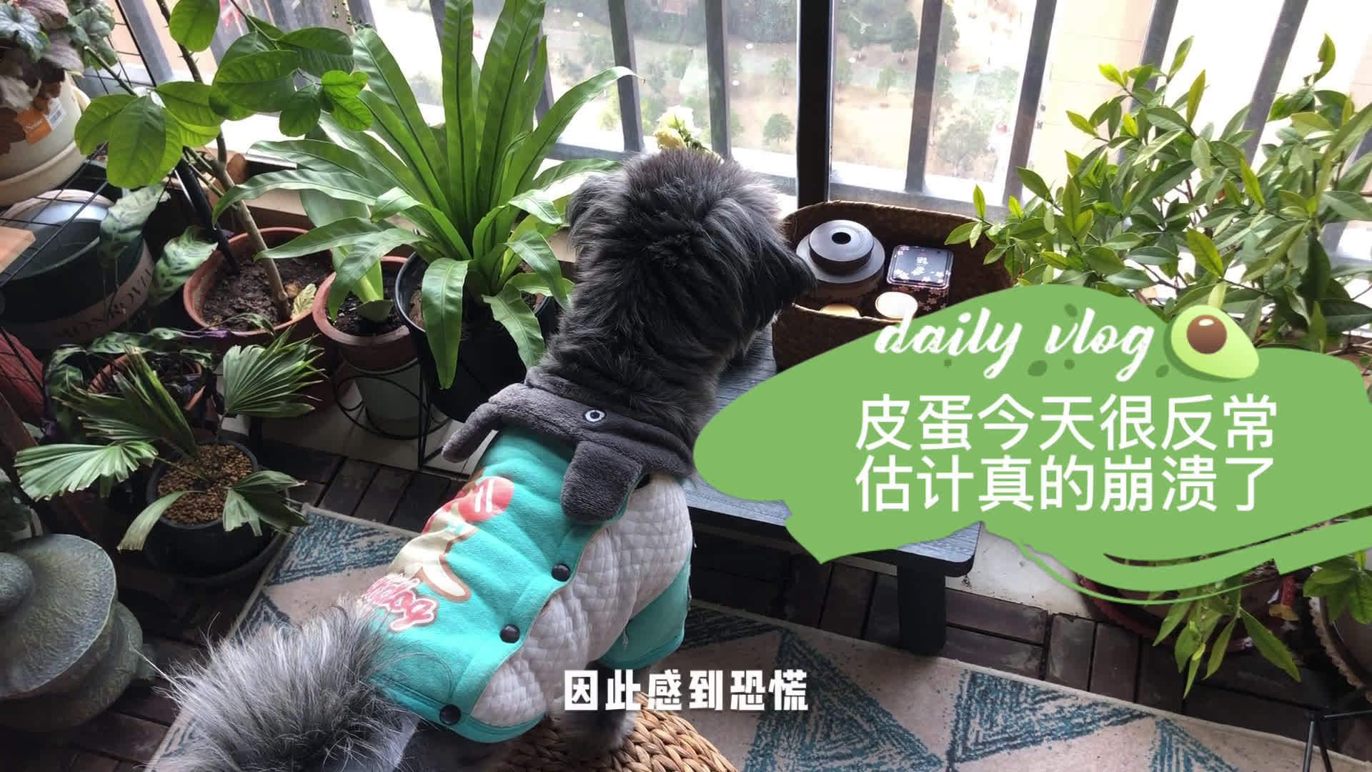 """武汉""""封城""""第7天,家里的宠物狗崩溃了,对着空气胡乱狂吼"""