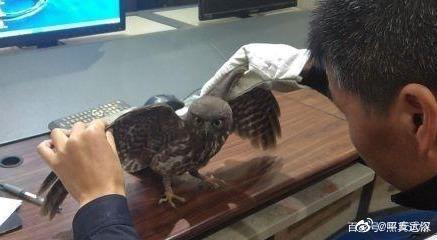 市民报警有只野鸟不会飞,一查是国家二级保护动物