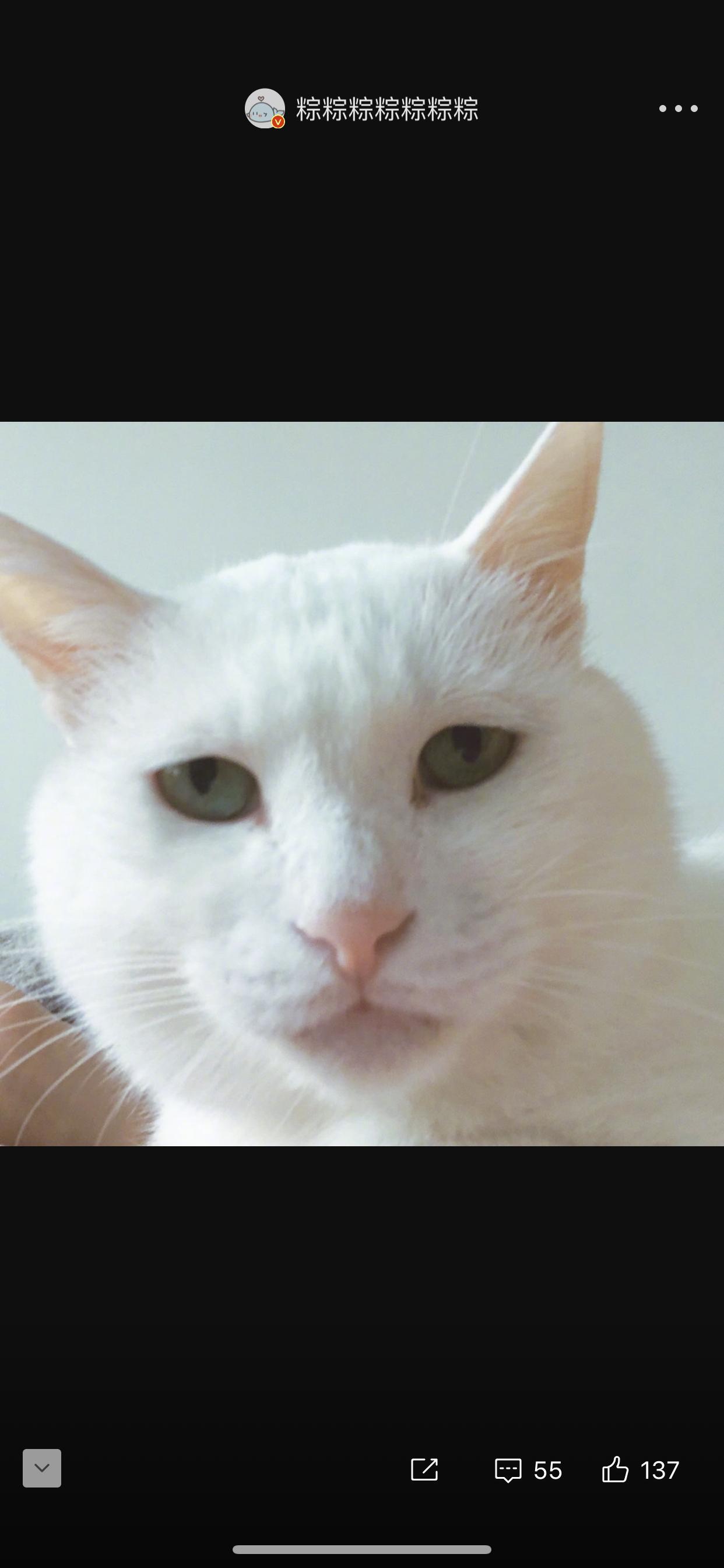猫猫证件照大赛