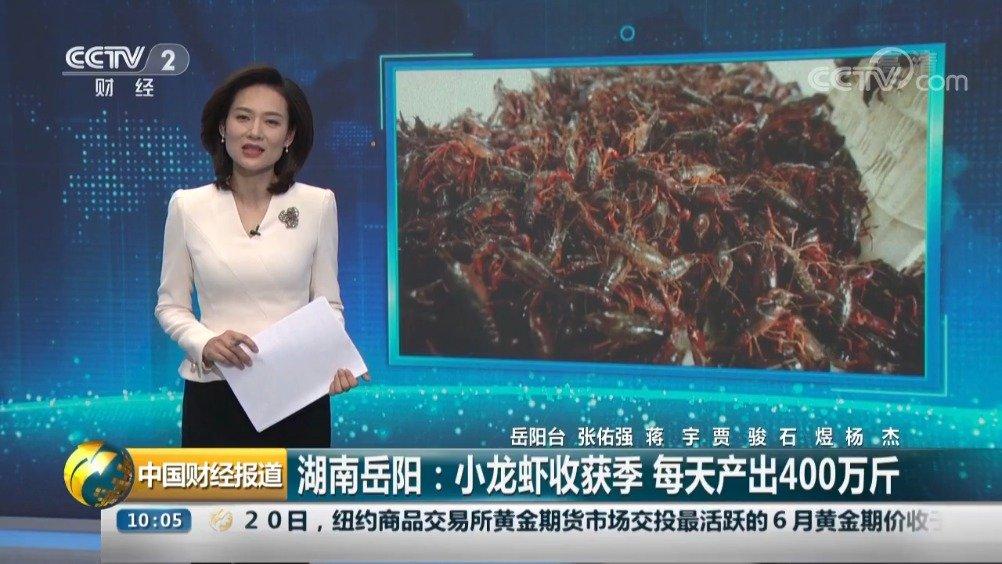 岳阳小龙虾又上中央电视台