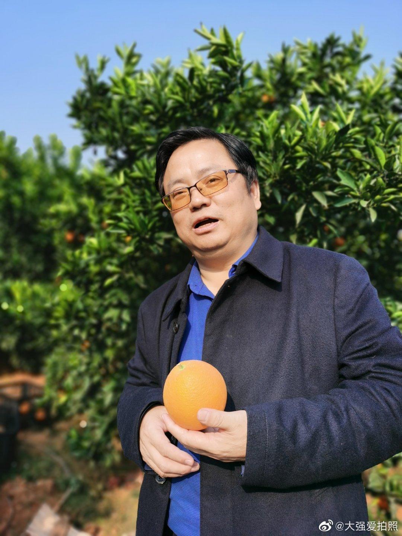 湖南省邵阳市新宁县种植脐橙有年头了