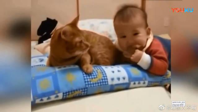 喵星人被小宝宝咬,是不是痛到怀疑猫生了?这个小宝贝是想吃肉了啊