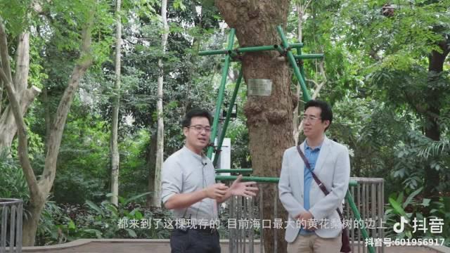 在海口人民公园的海南黄花梨边上抓住了一个上海的海黄爱好者~