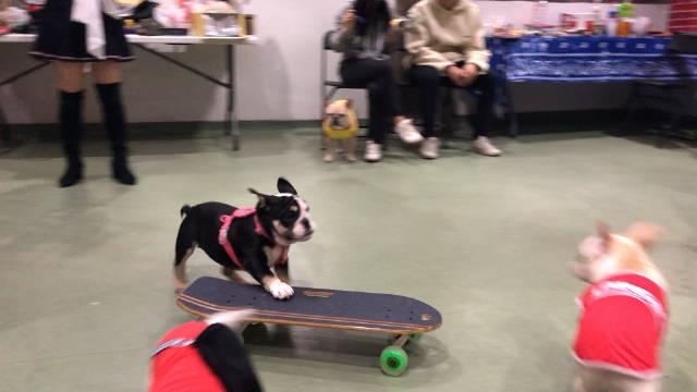 英斗大概天生就会玩滑板。。。没人教她。。。
