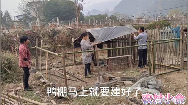 农村夫妻联手搭建鸭舍,过程十分默契,大叔的能力太强了