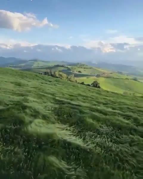 风吹过长满青草的山坡仿佛海浪一样好舒服