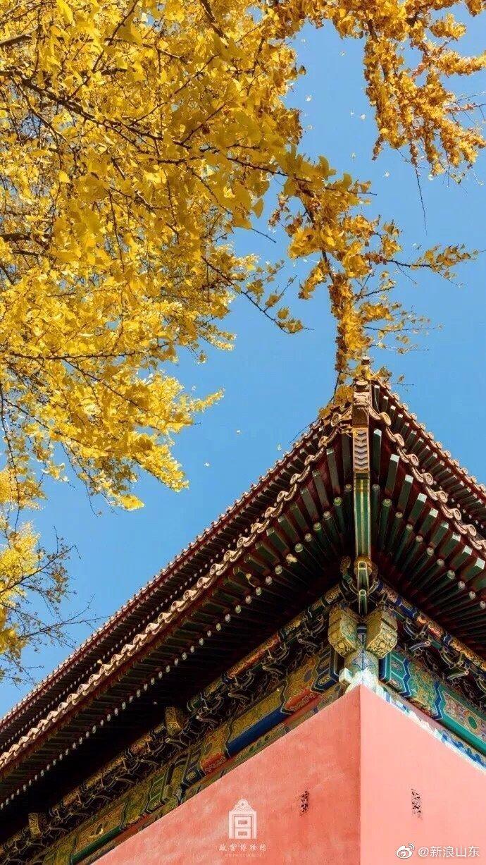 一到秋天,故宫就美成了紫禁城!(图来自:故宫博物院)