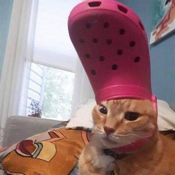 洞洞鞋猫猫