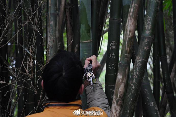 刻在犀牛或者竹子上的爱情就会长久吗