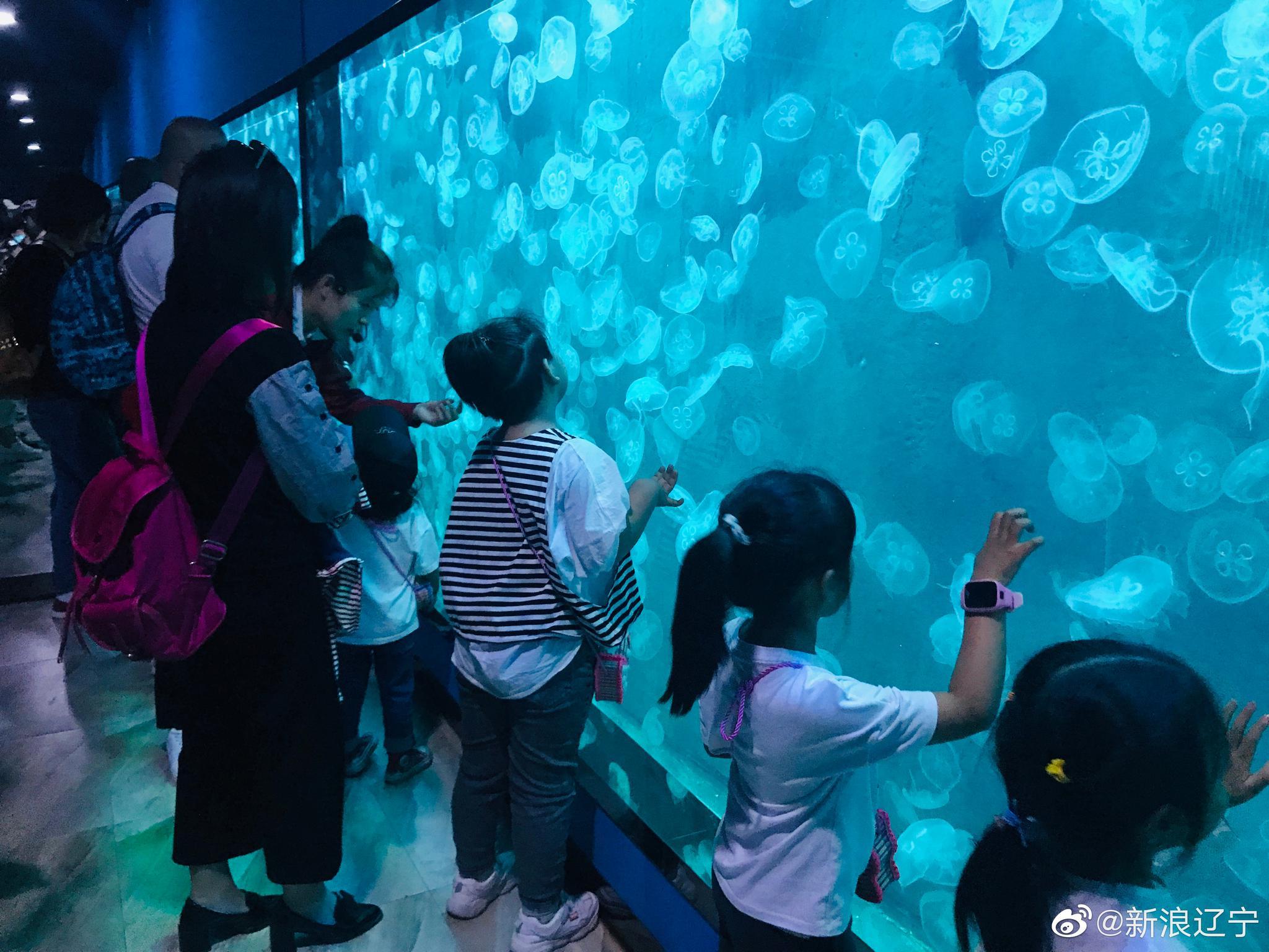 给大家推荐一个神奇浪漫的地方~盘锦@光合蟹业 的梦幻水母馆真的很美