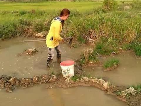 柬埔寨女孩穿牛仔裤在水田里抓鱼,看她用锄头的姿势就知道她能干