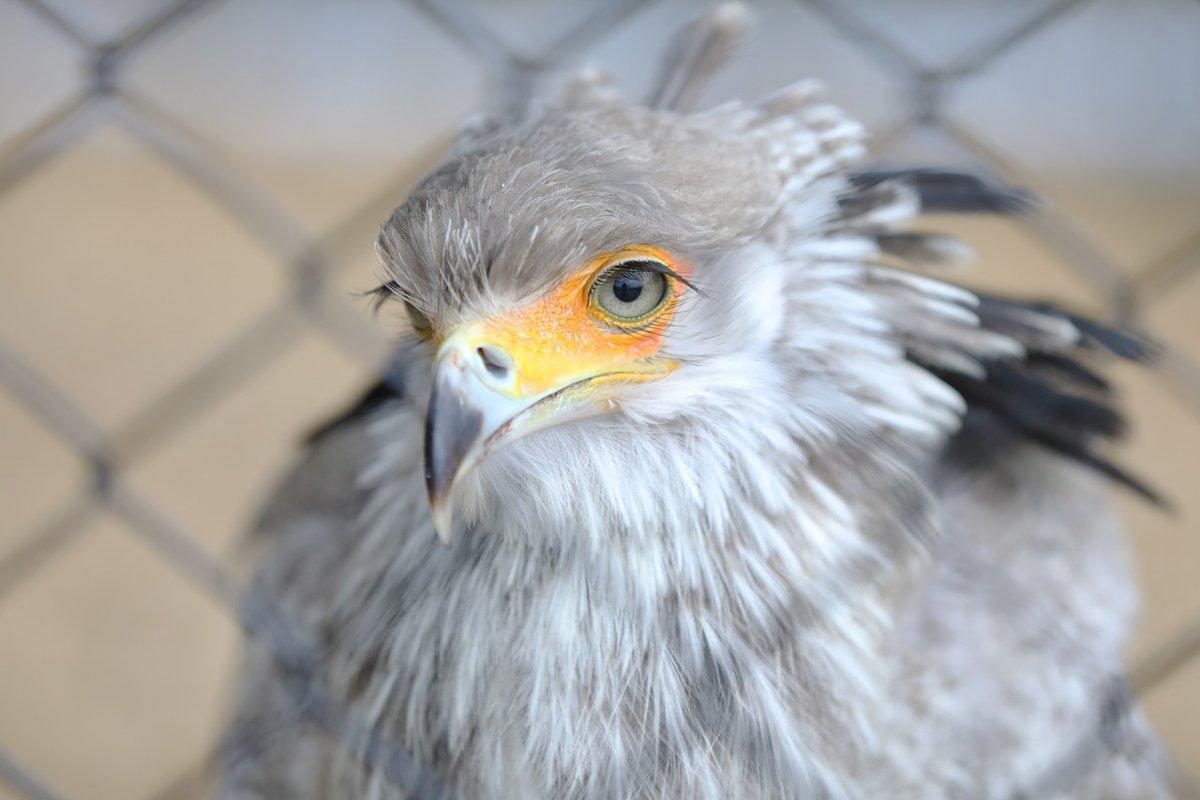 静冈县挂川花鸟园的蛇鹫
