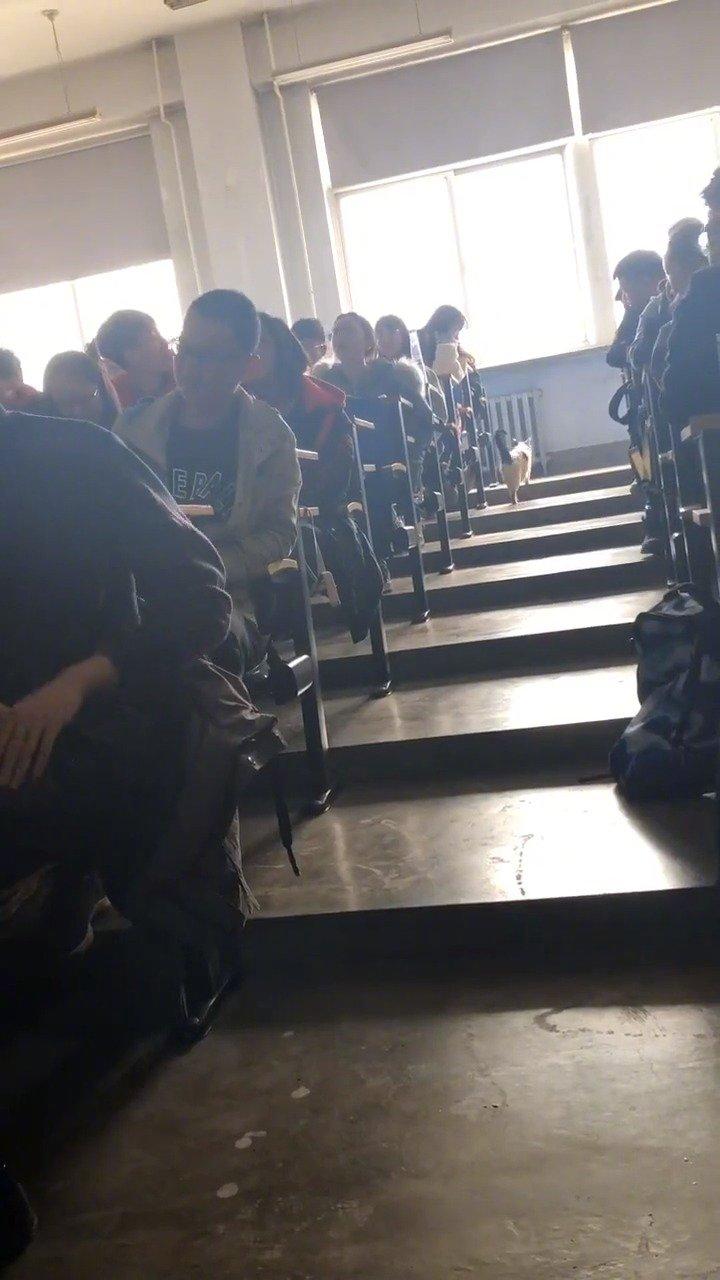 辽宁大学东配楼的学霸猫!
