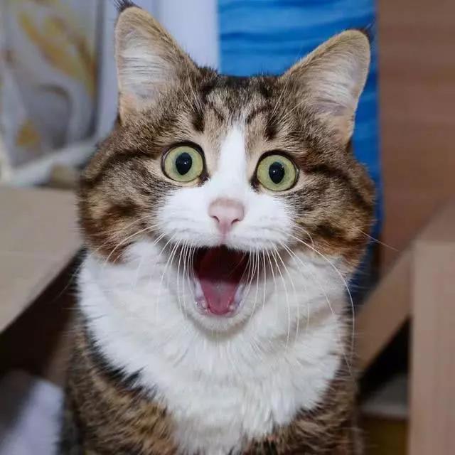 看一只猫咪,是怎样将自己练成表情包的 网友:表情真丰富图片