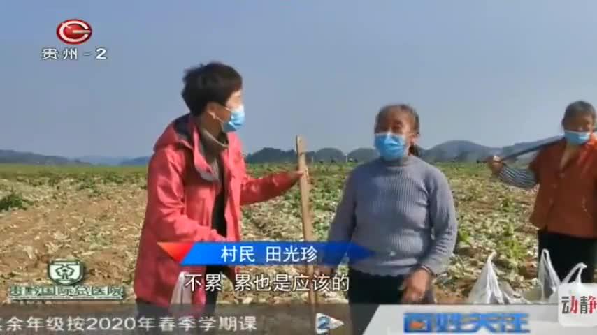 福泉:70吨爱心白菜驰援湖北鄂州