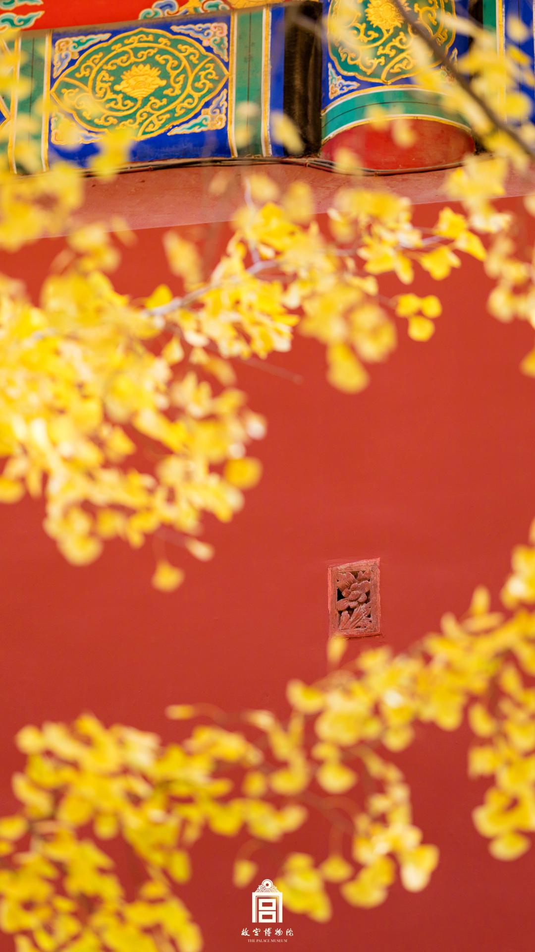 故宫瓦绿银杏黄,夜乘风舞扰御猫 (图/故宫博物院)