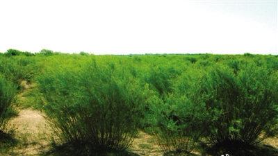 鄂尔多斯林业和草原生态建设工作硕果丰枝