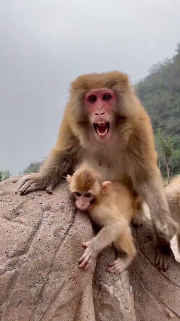 猴麻麻:不要给小孩零食!吃零食了它不爱吃饭~