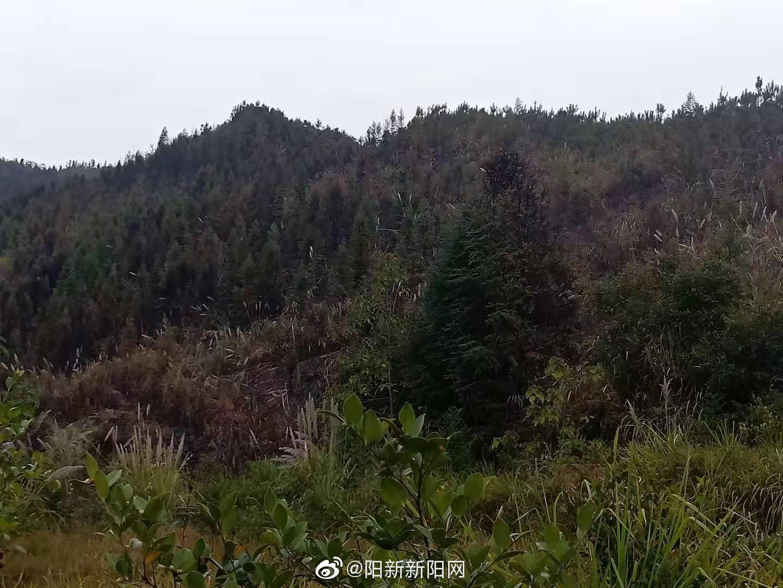 利用电网狩猎 引发森林火灾 | 两名犯罪嫌疑人被阳新县森林公安局刑事