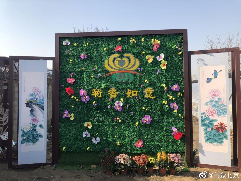 菊 香 如意(闫煦、戎超摄于平谷大兴庄菊花文化节)