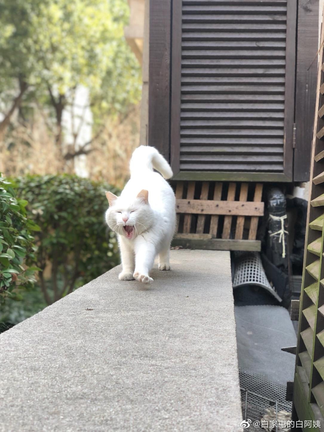 每次看见白胖妞,都觉得她象一位穿着白裙的少女
