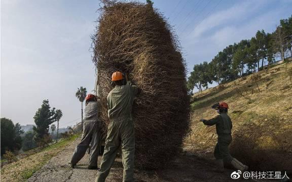 自己能走的植物,美国人对它恨之入骨,到了中国根本没机会长大