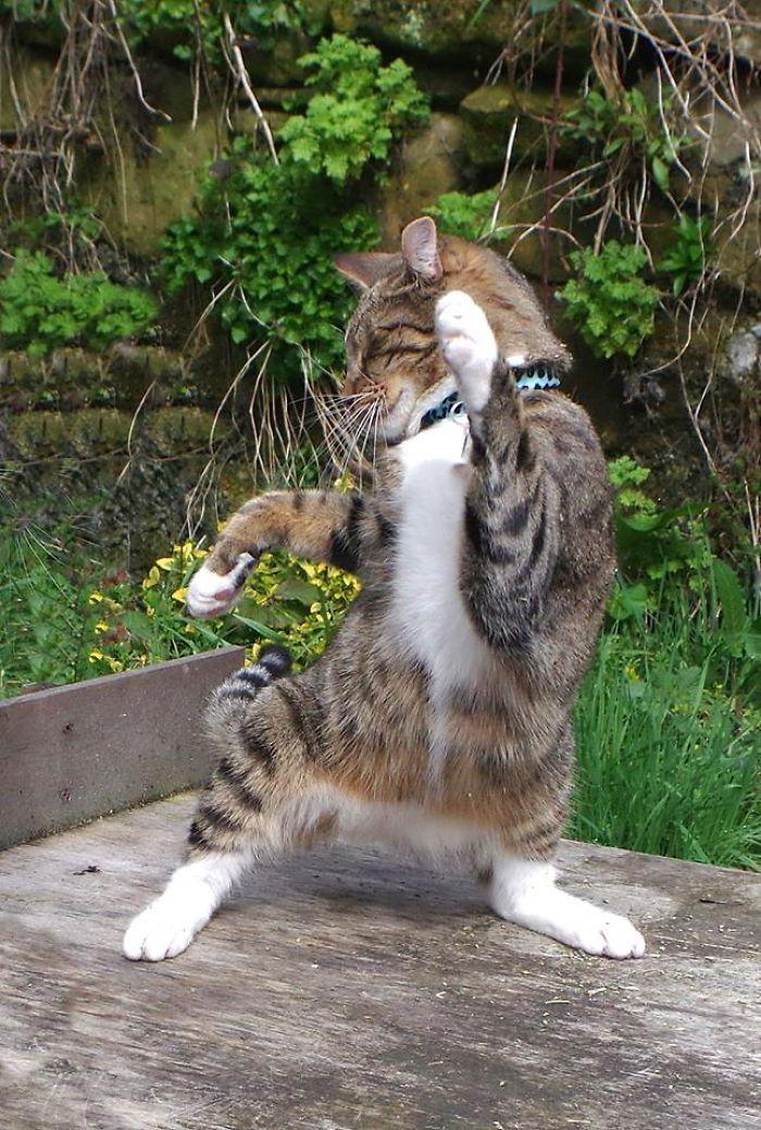 我的猫咪们爱跳舞摄影人:Turnip Towers