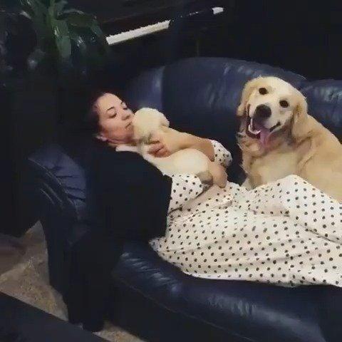一只醋意很大的狗子,我才是你的小宝贝!