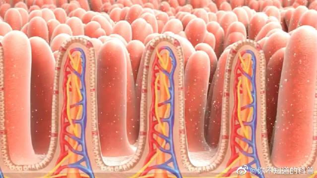 3D演示阿司匹林的体内之旅!主要介绍阿司匹林在体内的吸收和代谢