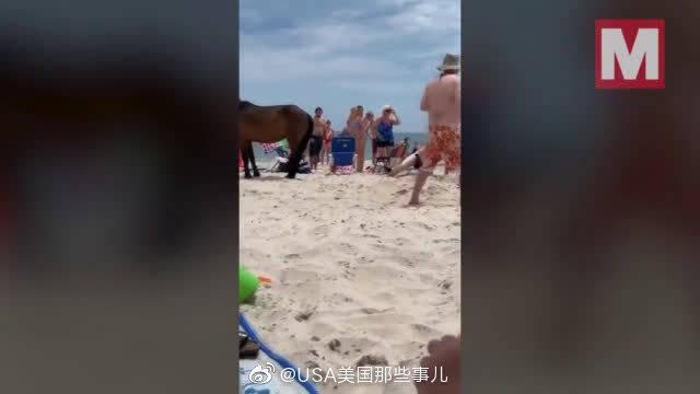 美国马里兰州阿萨提格岛,一男子因为轻抚野马