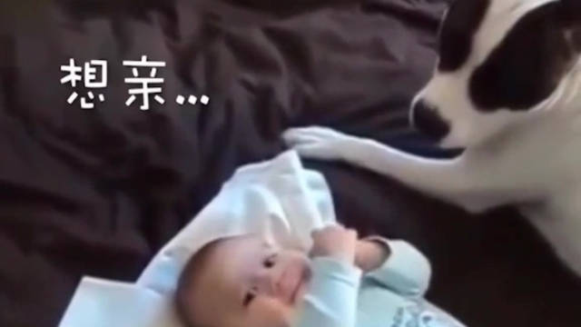 最好的带娃神器竟然是狗狗
