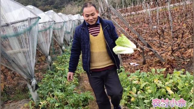 小伙子跟着农村大叔扯小菜,大叔家的白菜真是绿色食品,快来看看