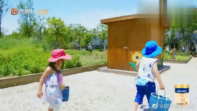四个萌娃一起去摘菜,大麟子和咘咘秒变小迷糊,安迪大哥范上身