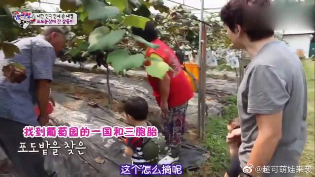 宋一国带着三胞胎去给麻麻准备生日礼物,礼物是葡萄?真有心