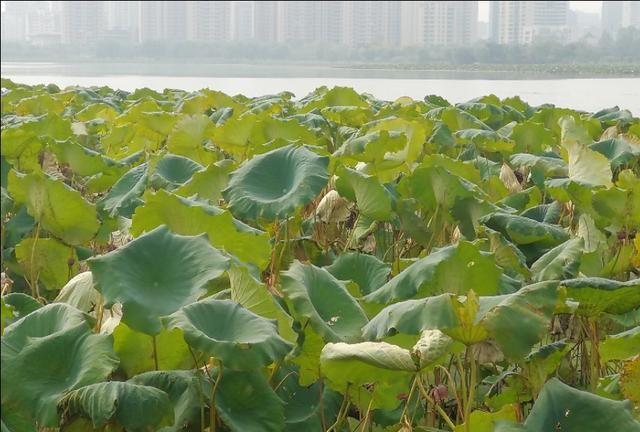气象分析显示 四川省今年夏旱比往年来得早