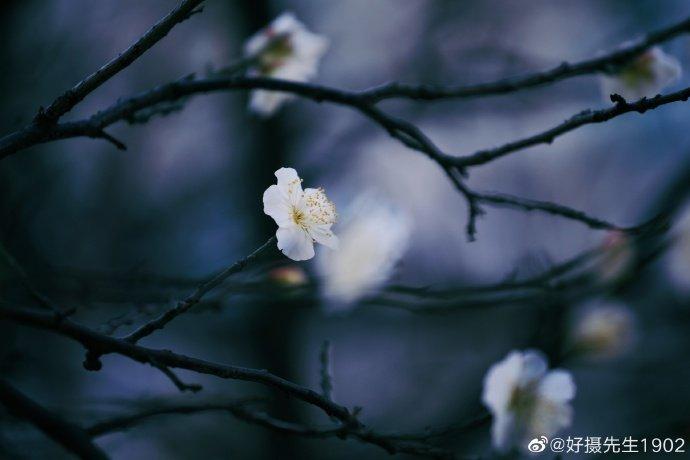 相思一夜梅花发,忽到窗前疑似君,期待春暖花开