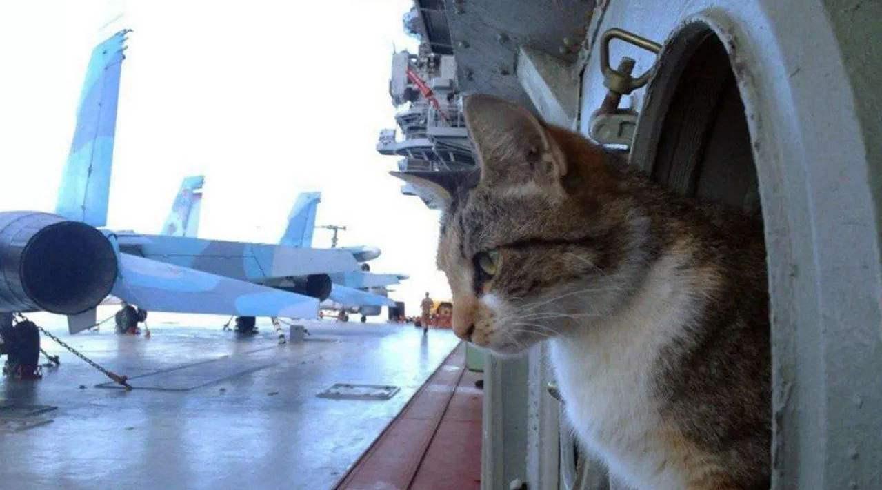 """俄海军为何""""钟情""""于猫?核潜艇也要带上一只,差点擦枪走火"""