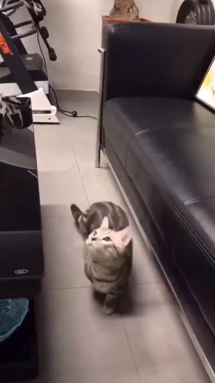 猫抓蚊子,还知道捂着。