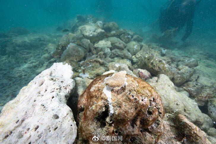 泰国皮皮岛珊瑚白化数量约占5%
