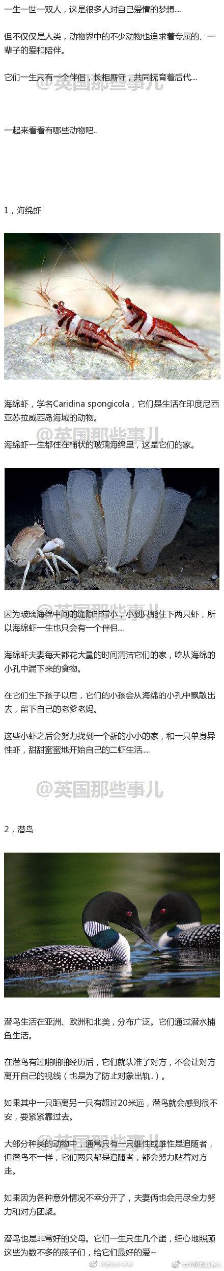 田鼠鲈鱼沙丘鹤,天鹅潜鸟海绵虾……这些动物