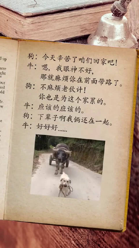 一对看门犬和耕地牛的故事…