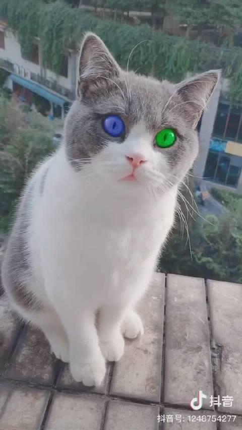 这是左眼OPPO,右眼vivo?