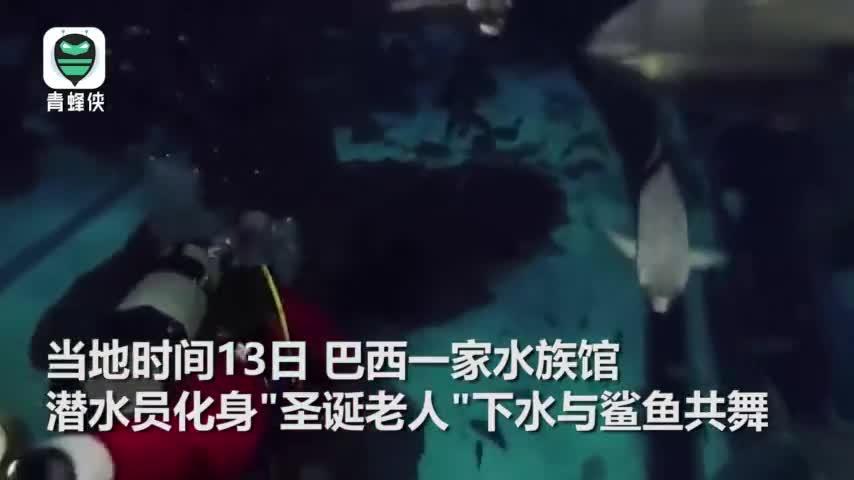 """为宣传海洋保护 潜水员扮""""圣诞老人""""水下与鲨鱼共舞"""