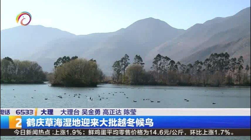 """""""冬之精灵""""的狂欢 大理鹤庆草海湿地迎来大批越冬候鸟"""