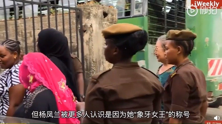 """""""象牙女王""""——中国女商人杨凤兰一个人灭绝了坦桑尼亚60%的大象"""