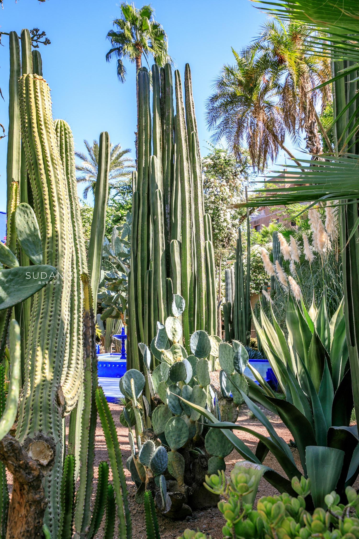 位于摩洛哥马拉喀什的马约尔花园(又叫伊夫·圣·罗兰YvesSaint-Lauren