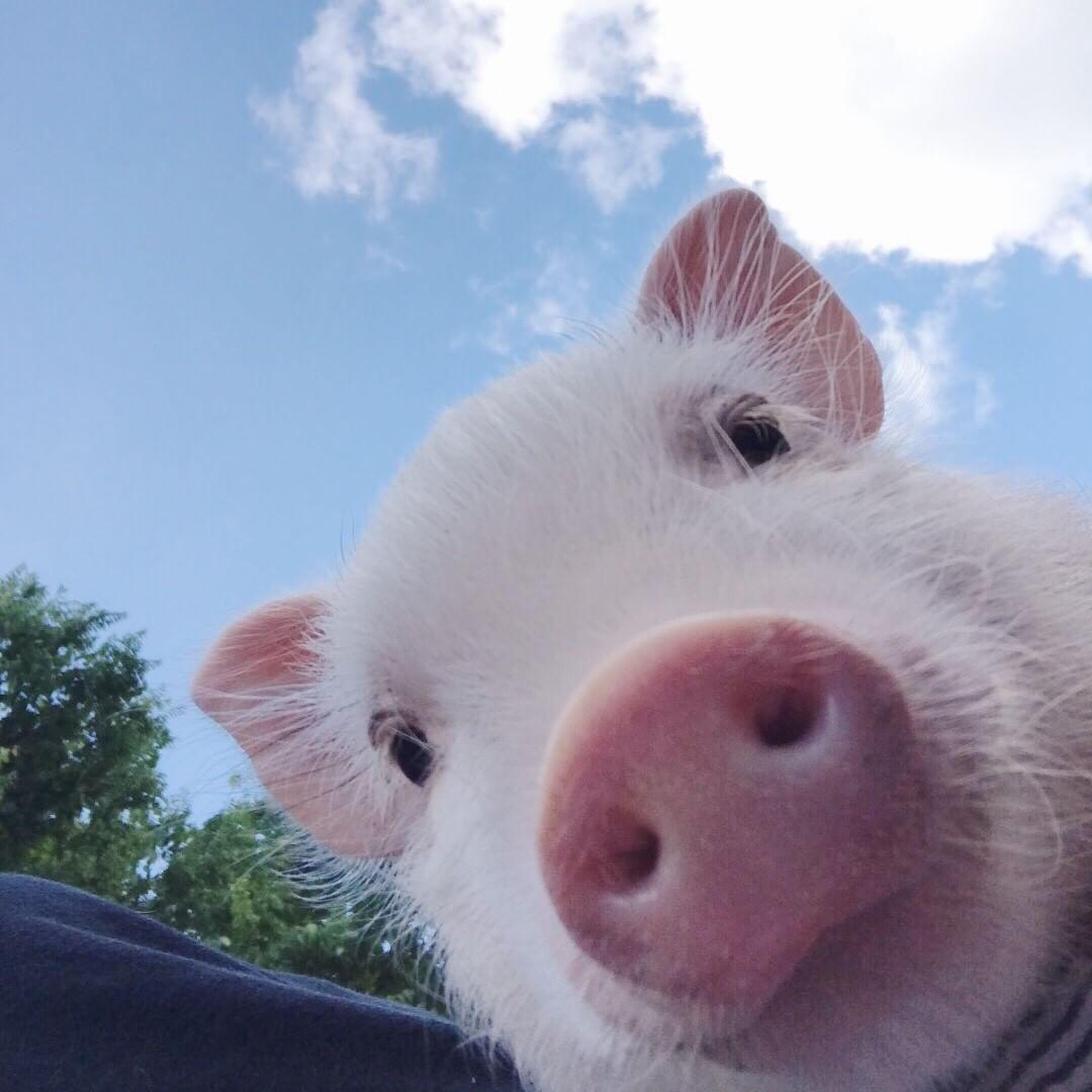 30个让人笑出猪叫搞笑表情包来啦,快来收图,那个靓仔没错就是你