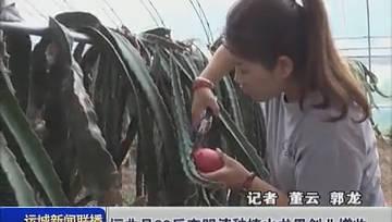 运城垣曲县90后大学生李明涛种植火龙果创业增收