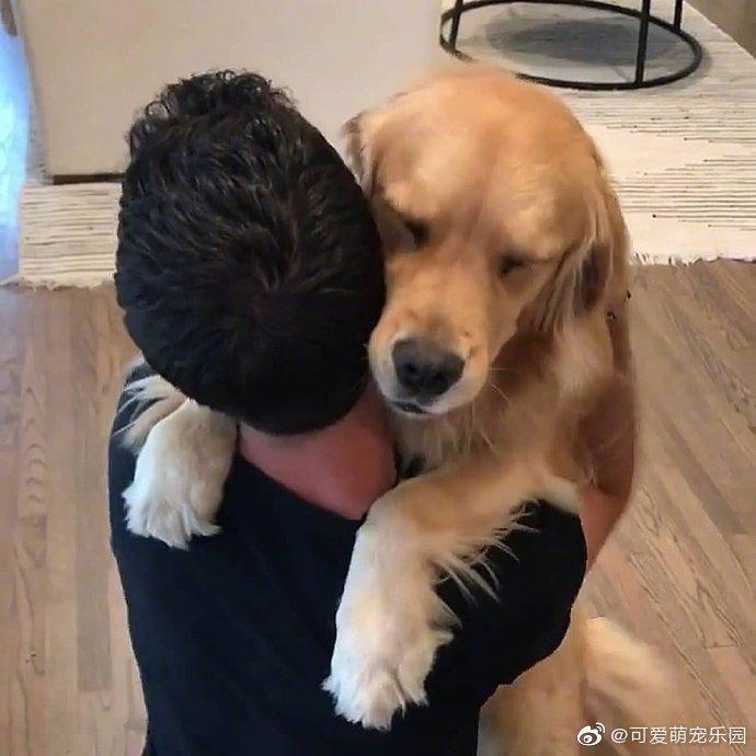 汪星人表达爱的方式:大暖男的拥抱和陪伴,是这世界最好的礼物!